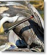 Pelican Scratch Metal Print by Adam Jewell