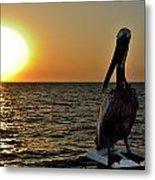 Pelican Sunset 2 Metal Print