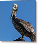 Pelican Watch Metal Print