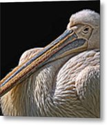 Pelicano Metal Print