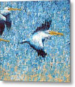 Pelicans 3 Metal Print by Ned Shuchter
