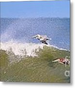 Pelicans 3868 Metal Print