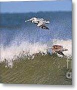 Pelicans 3870 Metal Print