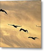 Pelicans Against A Golden Sky Metal Print