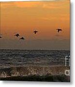 Pelicans At Sunrise 4674 Metal Print