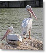 Pelicans By The Pair Metal Print