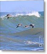 Pelicans Flying Between Waves 3788 Metal Print