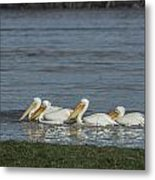 Pelicans In Floodwaters Metal Print