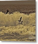 Pelicans In The Surf Metal Print