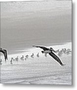 Pelicans Off For A Foggy Day Of Fishing Metal Print