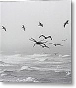 Pelicans On A Windy Foggy Day On The Oregon Coast Metal Print