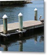 Pelicans On Dock In Florida Metal Print