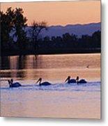Pelicans On Parade Metal Print
