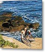 Pelicans On The Cliff - La Jolla Cove Metal Print
