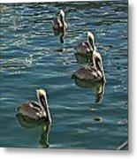 Pelicans On The Water In Key West Metal Print