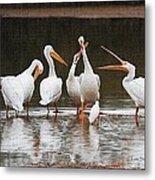 Pelicans Singing Auld Lang Syne Metal Print