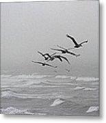 Pelicans With Full Bellies Metal Print