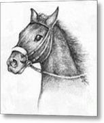 Pencil Drawing Of A Horse Metal Print by Kiril Stanchev