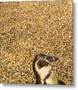 Penguin And Pebbles Metal Print