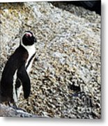 Penguin Chilling On Rock At Boulders Beach Cape Town  Metal Print