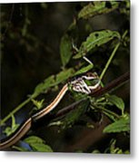 Peninsula Ribbon Snake Metal Print