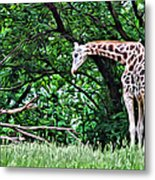 Pensive Giraffe Metal Print