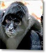Pensive Monkey Metal Print