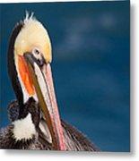 Pensive Pelican Metal Print