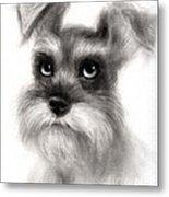 Pensive Schnauzer Dog Painting Metal Print