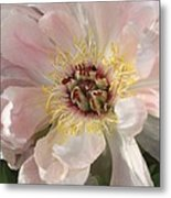 Peonie In Soft Pink Metal Print