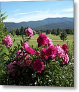 Peonies Please Metal Print