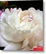 Peony Addiction Metal Print