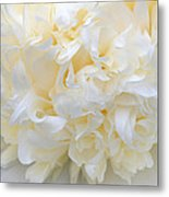 Peony Close-up In Pale Metal Print