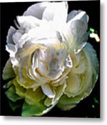 Peony In Morning Sun Metal Print