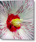 Peppermint Flame 04a Metal Print