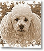 Peppie 1 Metal Print