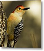 Perched And Ready Metal Print