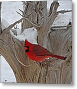 Perched Cardinal Metal Print