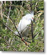 Perched Egret Metal Print