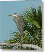 Perched Heron Metal Print