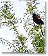 Perched In A Tree Metal Print