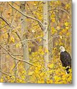 Perched In The Colors Of Autumn Metal Print