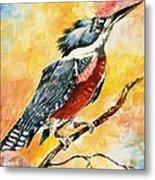Perched Kingfisher Metal Print