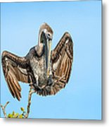 Perched Pelican Metal Print