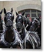 Percheron Horse Team 2008 Metal Print