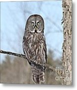 Perching Perfect Metal Print