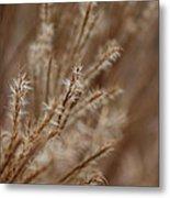 Perennial Grass Metal Print