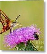 Perfect Hummingbird Moth Metal Print