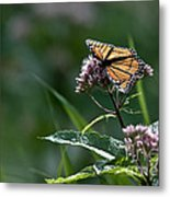 Perfect Monarch Metal Print