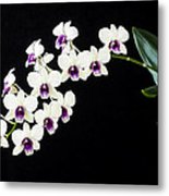 Perfect Phalaenopsis Orchid Poster Metal Print